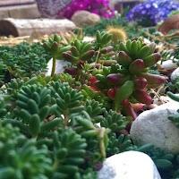 primavera-luminasioIMAG0222.jpg