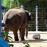 Houston Zoo - 116_8410.JPG