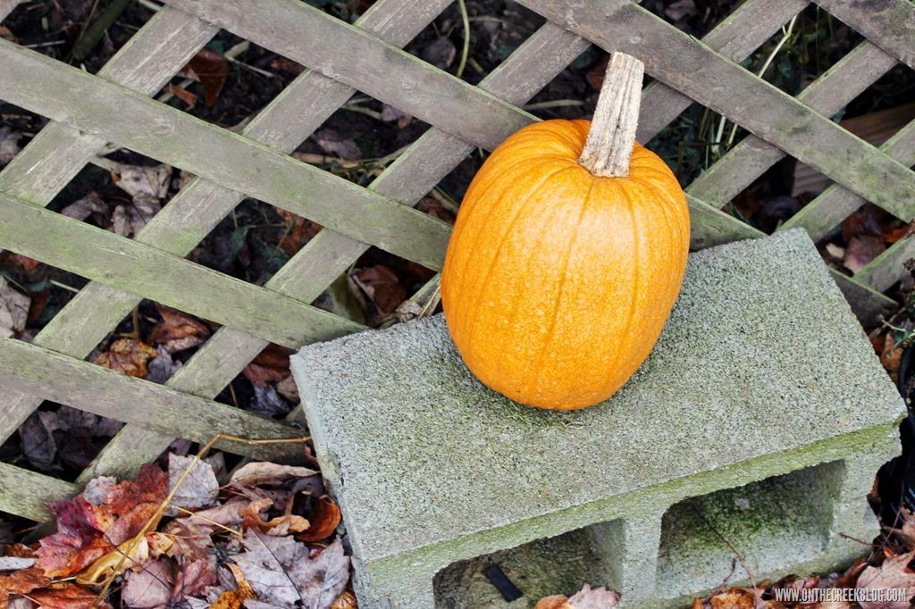 [pumpkin8%5B10%5D]