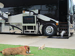 Delilah is ready to be back on a tour bus... grass is just uncivilized to her