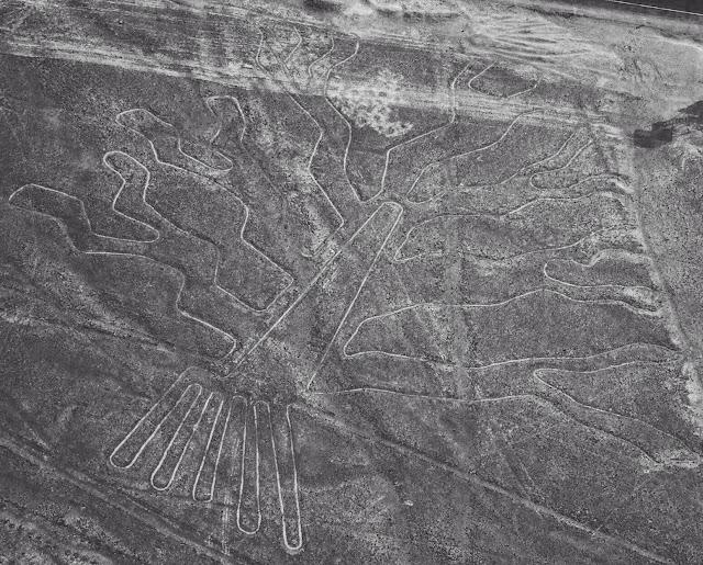 Las líneas de Nazca - El árbol - HistoriadelasCivilizaciones.com