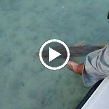 Snook W Danny.avi