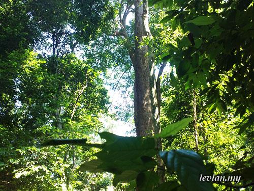 Jungle (SE Vivaz)