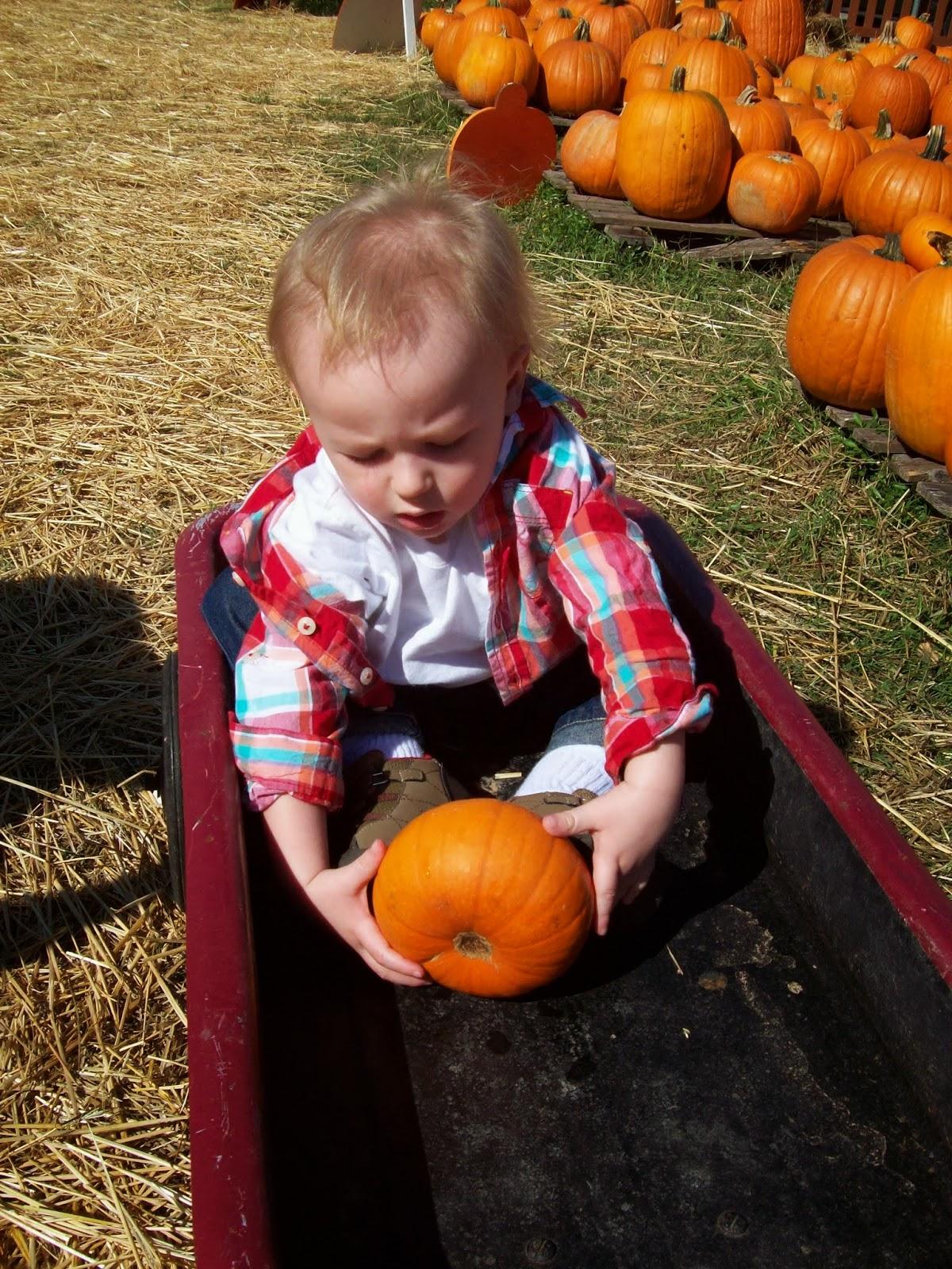 Pumpkin Patch - 114_6557.JPG