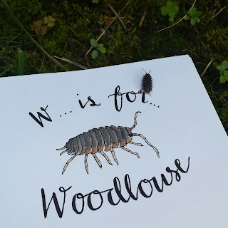 Woodlouse :: www.AliceDrawsTheLine.co.uk
