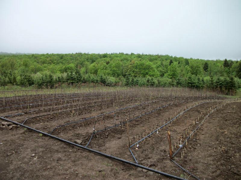 Broyage de surface agricole - broyage_de_surface_agricole_1_20130124_1423191164.jpg