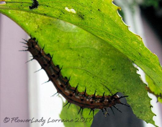[06-16-butterfly-cats%5B4%5D]