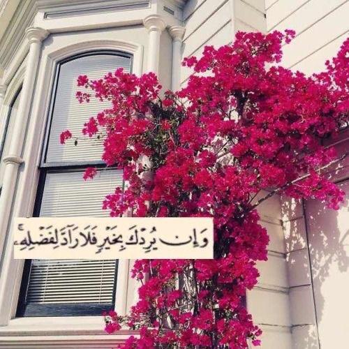 Eman Jaber Photo 11