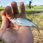 20160611_Fishing_Pryvitiv_023.jpg