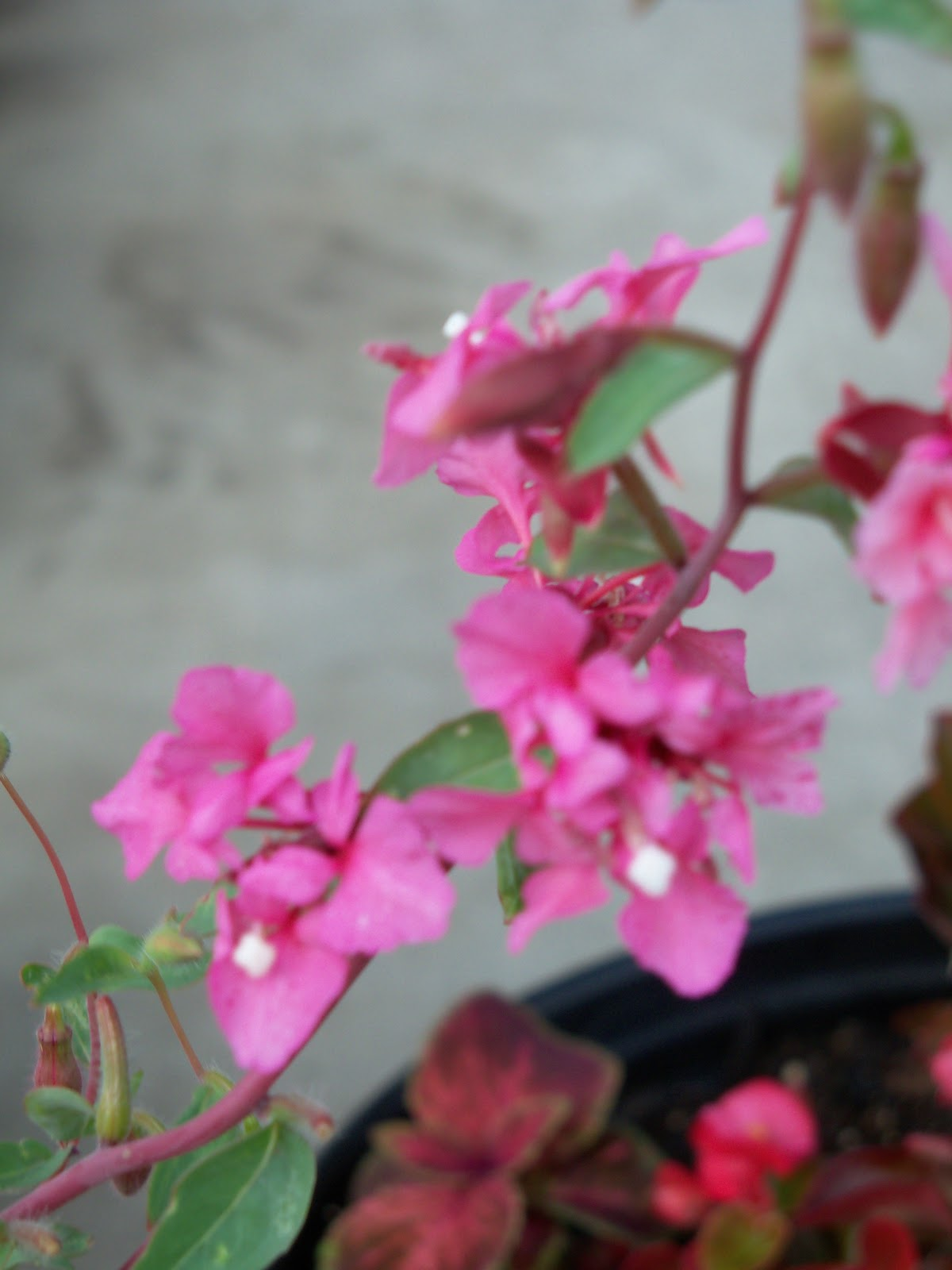 Gardening 2010, Part Two - 101_2776.JPG