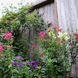 Gardening 2011 - 100_7231.JPG
