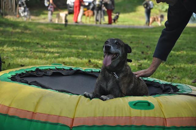 Survival voor Baas en Hond 2012 - DSC_0488.JPG