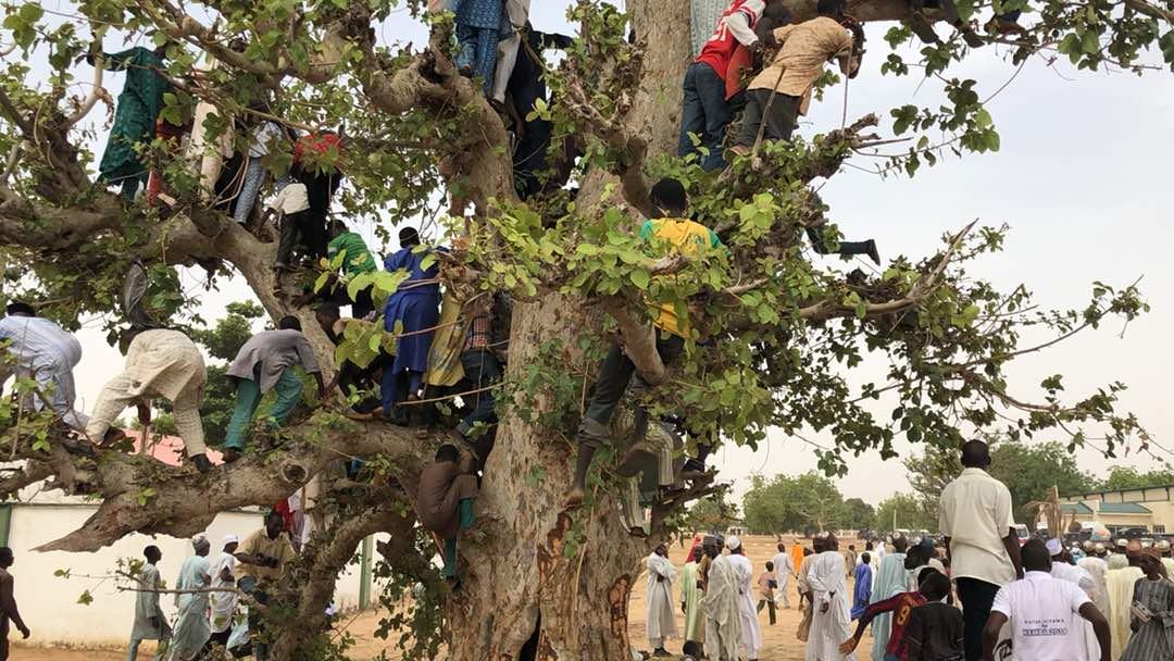 Photos Of People Climbing Trees To Welcome Buhari In Jigawa