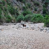 Mallorca 2012 - DSC_1021.JPG