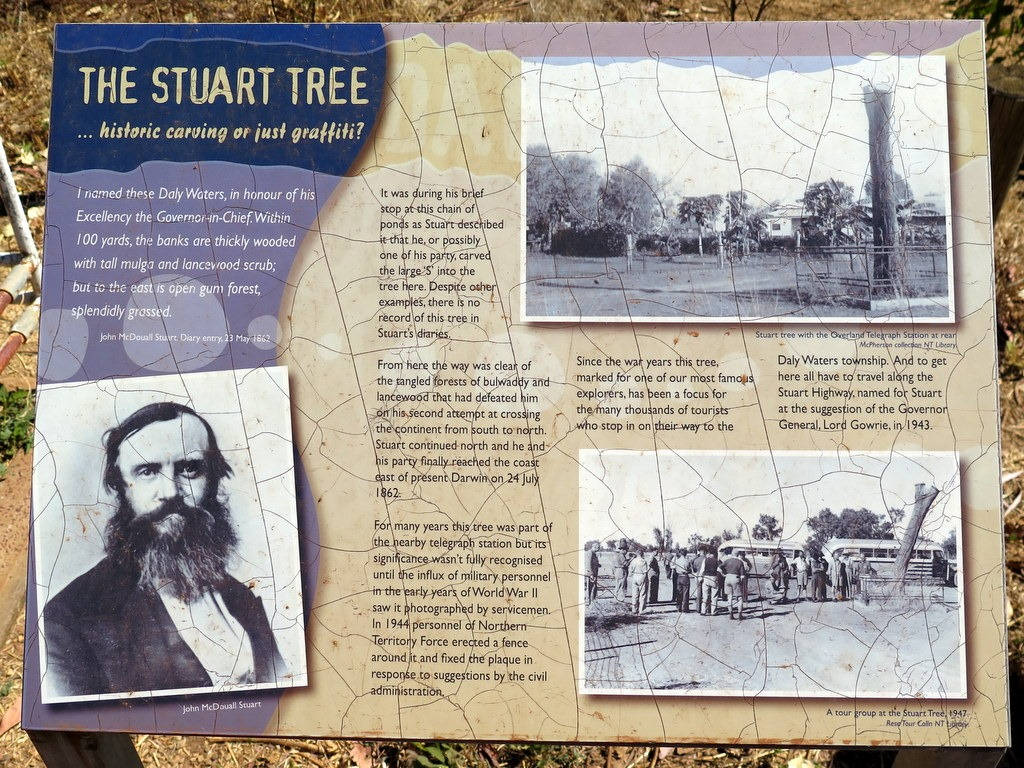 [170606-006-Daly-Waters-Stuart-Tree3]