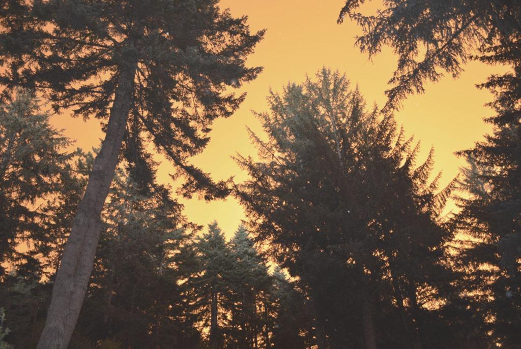 [View-through-trees5]