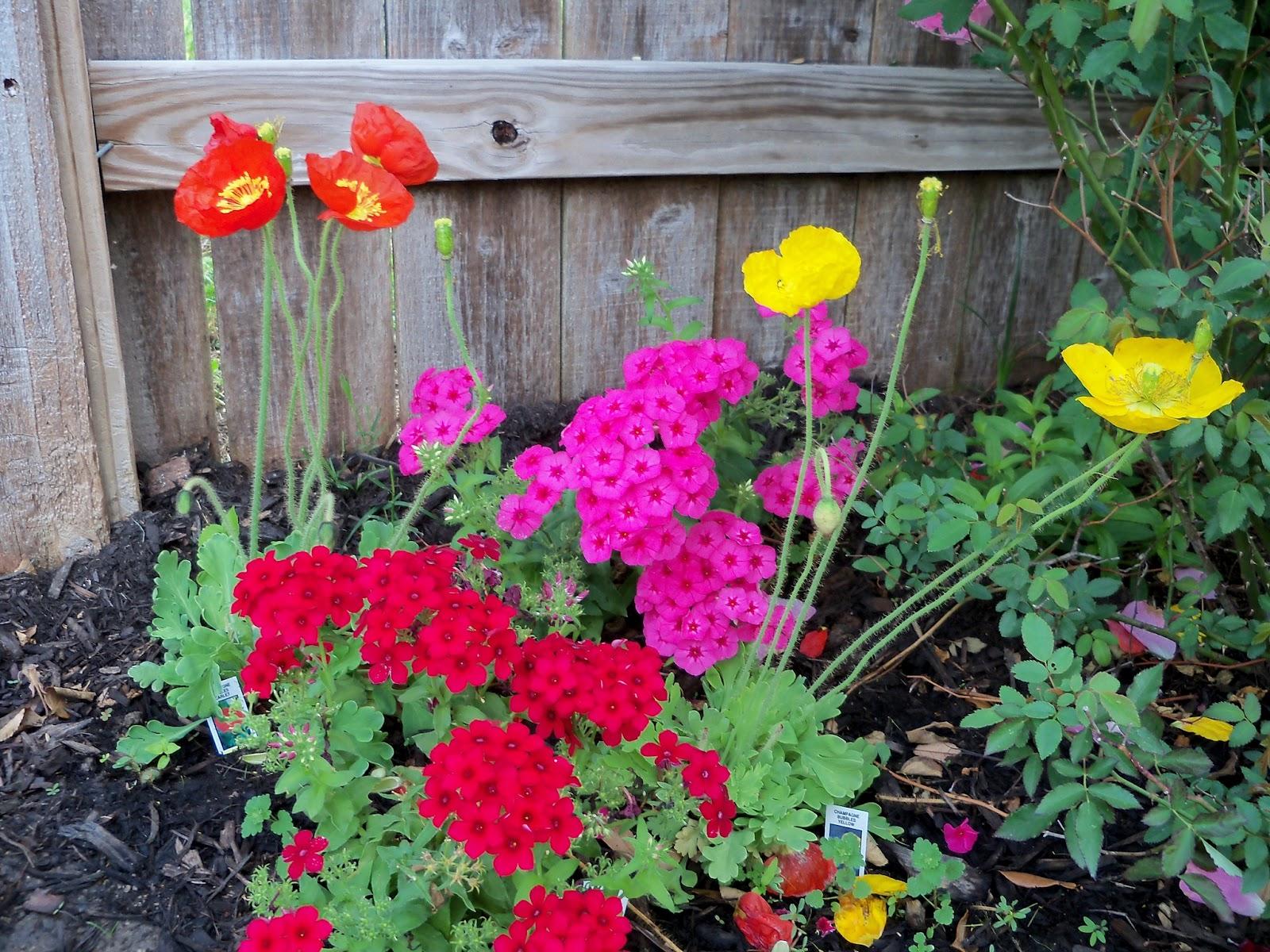 Gardening 2011 - 100_7161.JPG