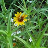 Gardening 2010, Part Three - 101_3693.JPG