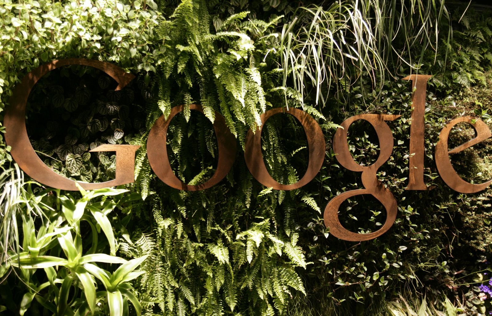 google office in sydney. Google Australia Office In Sydney - Plants With Logo Reception Are. Download Original Image. O