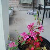 Gardening 2010, Part Two - 101_2774.JPG