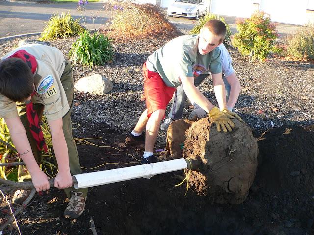 Tree Planting November 2010 - 110410%2B018.JPG
