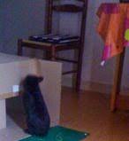 [adopté] Mica, lapin noir Mica8-5c45c