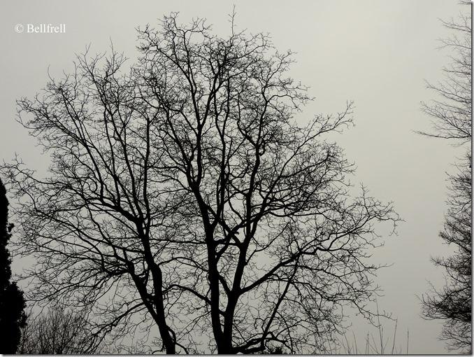 Baum im Hochnebel