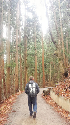 Walking along the muddy trail - at least it's not icy or snowy - for 1.6 km towards Jigokudani Monkey Park, surrounded by tall ceder trees