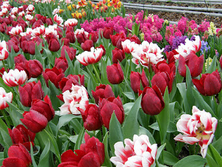 Flori de primavara 066