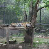 Zoo Snooze 2015 - IMG_7198.JPG
