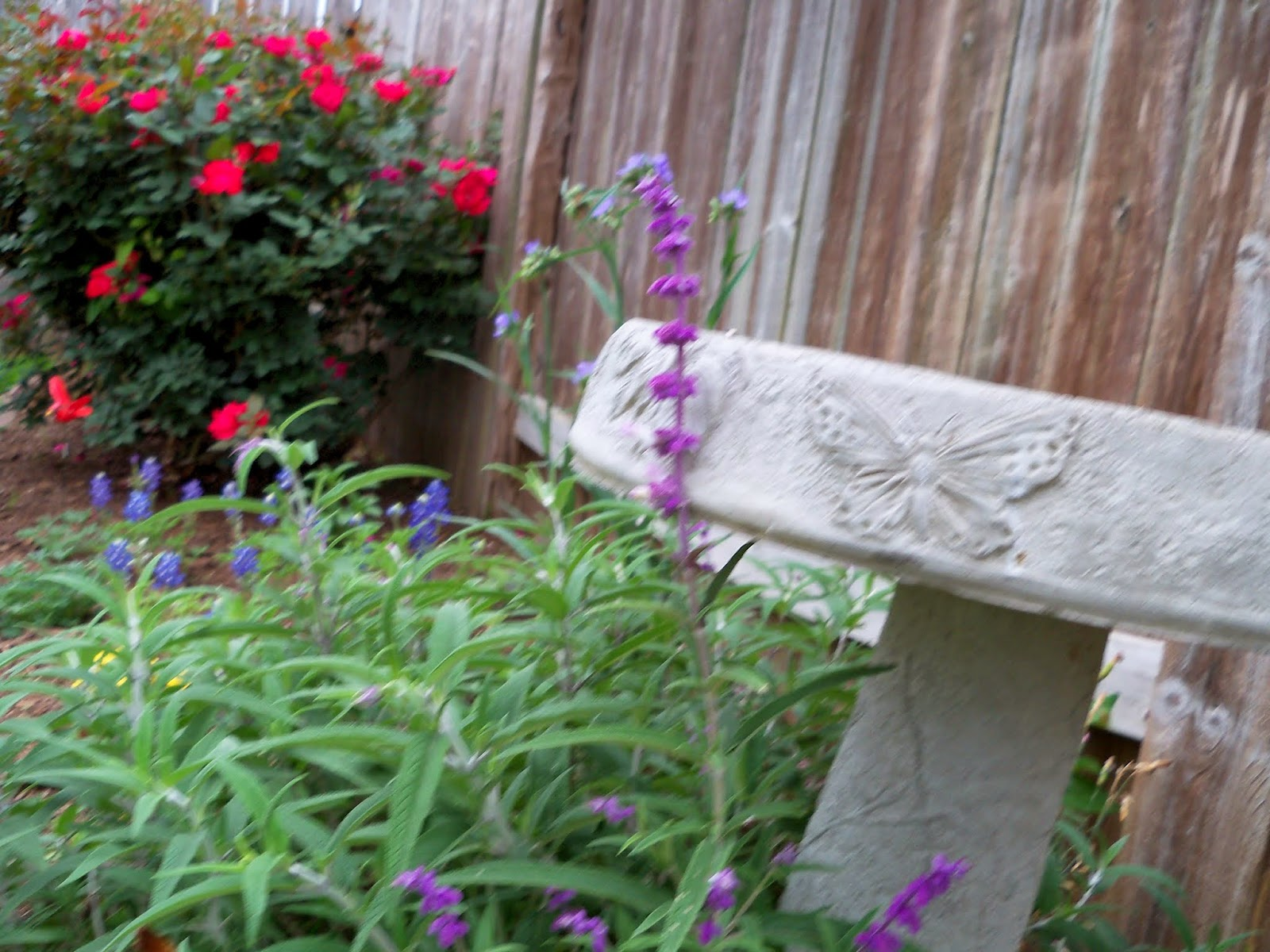 Gardening 2014 - 116_1498.JPG