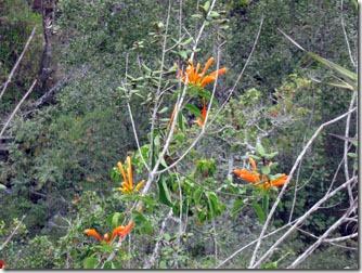 flores-silvestres-carrancas-1