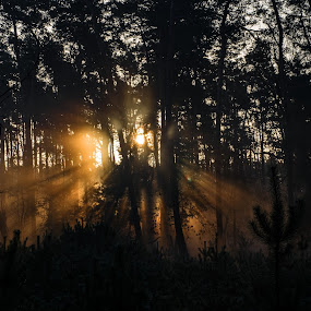 Mysterious forest by Jiří Valíček - Landscapes Forests ( mysterious, forest,  )