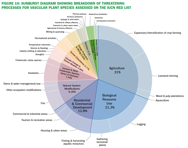 Sunburst diagram showing breakdown of threatening processes for vascular plant species assessed on the IUCN red list. Graphic: Royal Botanic Gardens, Kew