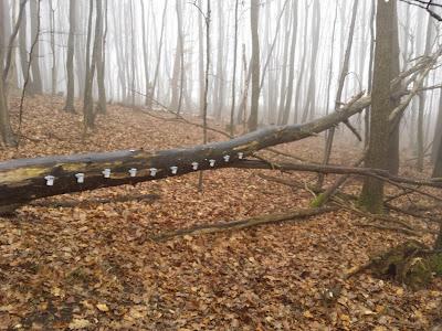 Geocache: Die Qual der Wahl (GC435PE) Welches Doserl ist es denn nun oder nicht? http://www.austrian-weather.com/gcdir/found/Die_Qual_der_Wahl_GC435PE/index.html