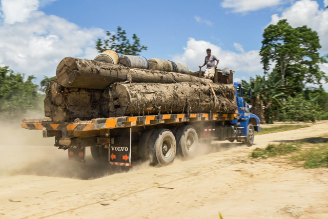 Illegal timber leaves the Amazon with false documentation. Photo: EIA
