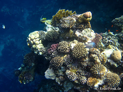 006 Ägypten Dez 2014 - Marsa Alam - Coraya Bay IMG_0274