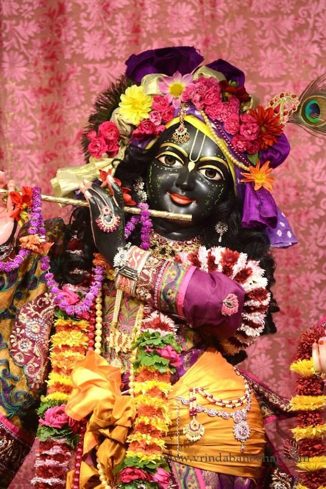 ISKCON GEV (Wada) Deity Darshan 23 Jan 2016 (6)