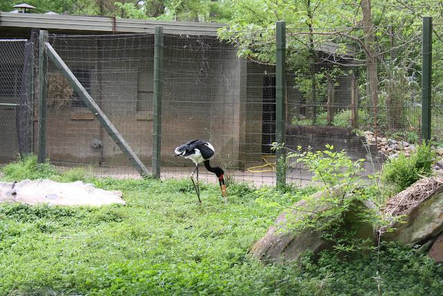 Zoo Snooze 2015 - IMG_7242.JPG
