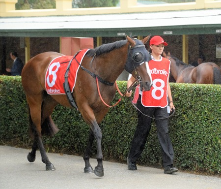 oakleigh plate_snitty kitty 1