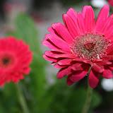 Gardening 2012 - IMG_2769.JPG