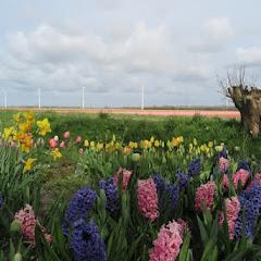 Weekend Noord Holland 2016 - IMG_6678_800x534.JPG