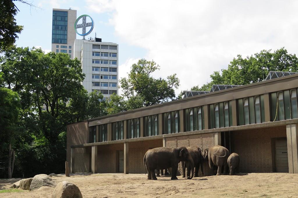 Eher traurig wirkt die Unterbringung der Elefanten