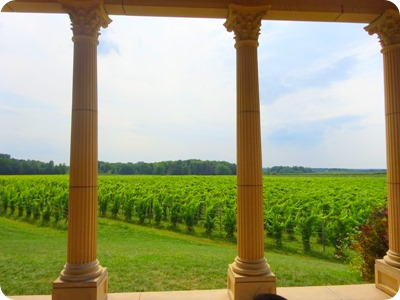 South River vineyard