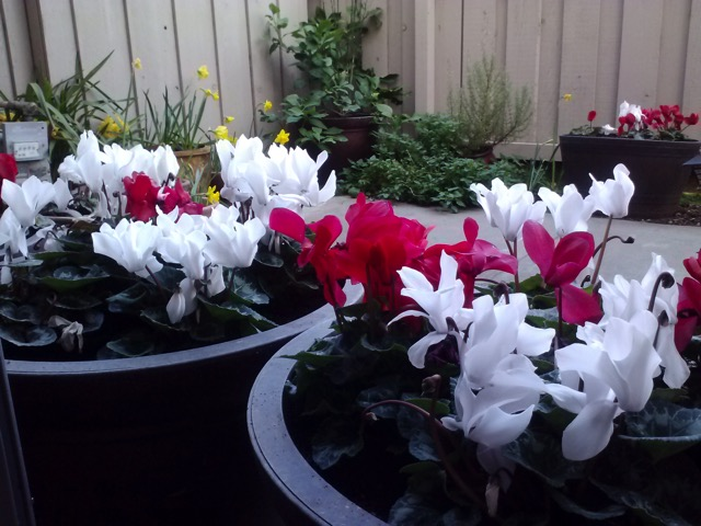 Patio Garden Winter