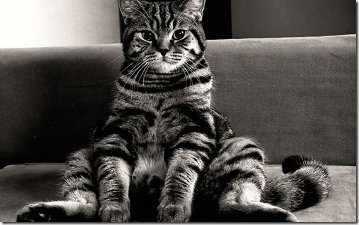 22 fotos de gats (3)