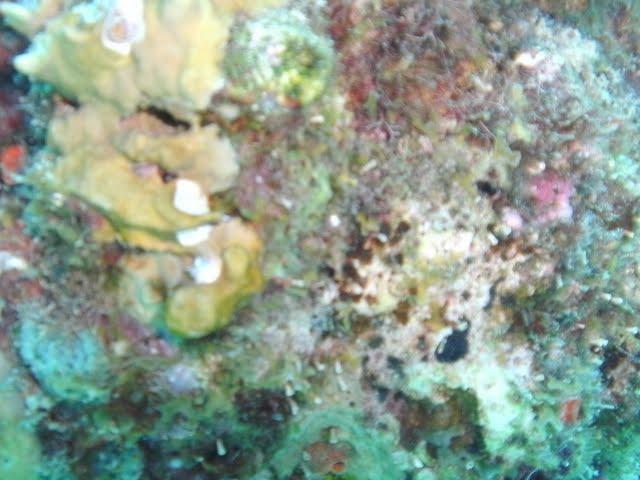 Bonaire 2011 - PICT0138.JPG