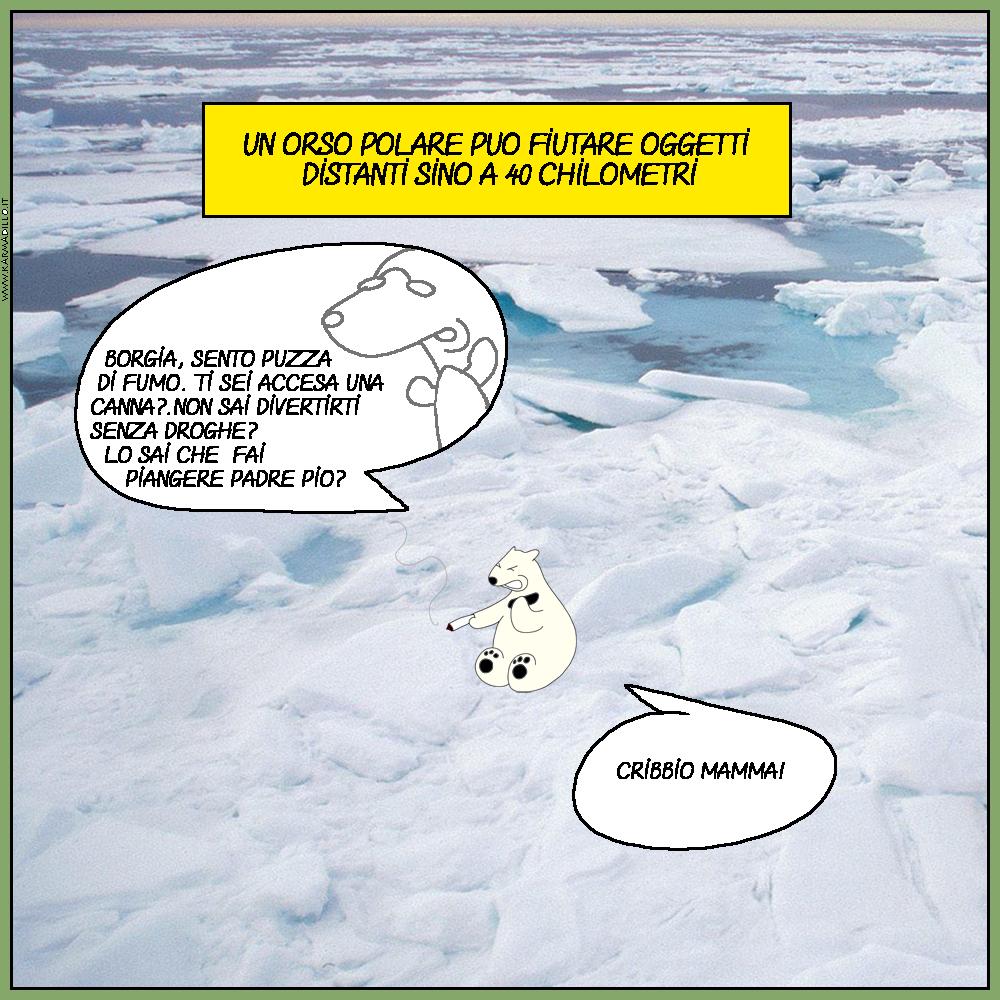 Non ci sono tante cose da fare nel circolo polare artico