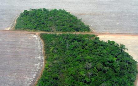Αμαζόνιος : εκπέμπει περισσότερο διοξείδιο του άνθρακα απ' όσο απορροφά