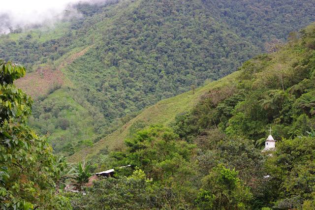 Las Juntas, 1350 m (Carchi, Équateur), 23 novembre 2013. Photo : J.-M. Gayman